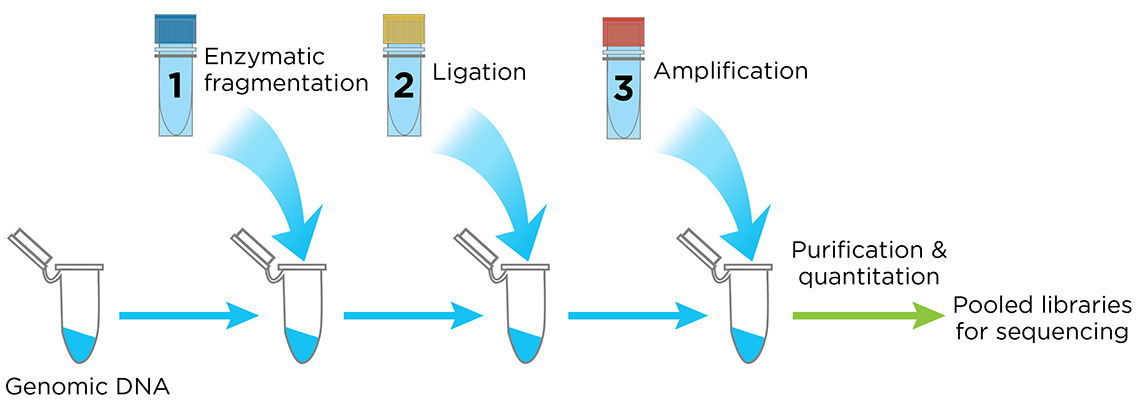 The Celero PCR Workflow - Figure 4