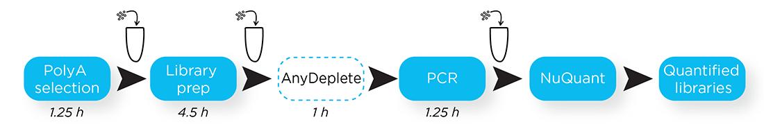 NGS Dreamprep - Steps Workflow