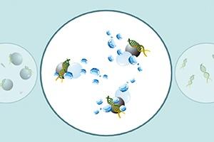 Nucleic acid purification